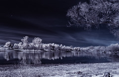 Lindo Lake With Tree Reflection In Infrared (Bill Gracey 25 Million Views) Tags: view lindolake lakeside infrared infraredphotography convertedinfraredcamera ir composition channelswapping clouds reflections trees nature surreal pano panorama birds