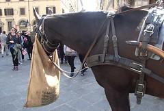 381 (bluefootedbooby) Tags: cavallo firenze horse