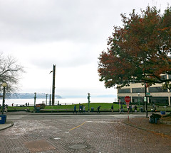 Pedestrians near Victor Steinbrueck Park on a rainy day (Seattle Department of Transportation) Tags: seattle sdot transportation victor steinbrueck park tree totem pole waterfront jamesbender seagull pedestrians leaves fall walk