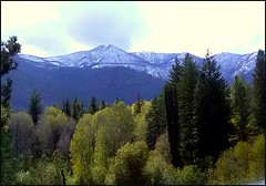 North Cascade peaks seen from the Twisp River Road (edenseekr) Tags: twispriver valley snowy mountains evergreens