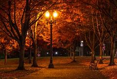 windy night (marcus_lahr) Tags: wind lights night yellow orange autumn portland pdx usa