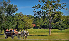 HERMITAGE WAGON RIDE (Wolf Creek Carl) Tags: outdoors horse wagon trees tennessee thehermitage andrewjackson pastoral