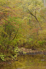 Autumn impression (baro-nite) Tags: dukeforest fallcolor centralnorthcarolina newhopecreek reflections pentax k1 smcpentax11885mm iridientdeveloper
