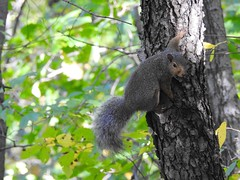 Frozen Moment (Anton Shomali - Thank you for over 3 million views) Tags: yellow leaves nature animals photo picture scary scared i am squirrel tree fall branch animal small nikon coolpix p900 frozenmoment