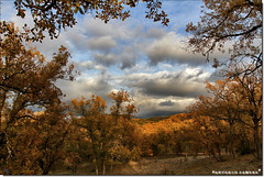 Ventana al Otoño (Antonio Zamora) Tags: antoniozamora amarillo árbol arboles árboles arbol autumn yellow bosque otoño orange paisaje paisajes landscape landscapes nubes nube nature naranja natura naturaleza clouds cloud canon castillalamancha colores cielo color colors colours casasimarro campo cuenca colour serranía spain sky skies sunset españa eos7d eos weather