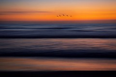 Memories (Christina's World :) Tags: icm flying flock flockofbirds sea sandiego scenic sky seascape serene seashore seagulls ocean socalifornia dramatic dark delmar dusk dreamy bluehour sunset sunlight goldenhour impressionism landscape mood minimalism nature natureabstract outdoors orange romantic red reflections seaside textures topaz touristattraction unitedstates usa vividcolors waterscene waves water exotic 1022 memories longexposure le intentional camera movement marculescueugendreamsoflightportal fblp elitegalleryaoi bestcapturesaoi aoi
