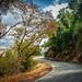 Winding Road of Calaveras Road
