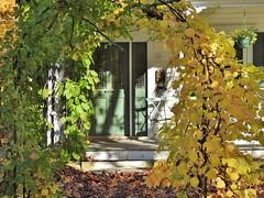 Leafy frame... (Jane Lazarz Nature Photography) Tags: theberkshires walkingnewengland janelazarz massachusetts fallinnewengland nikonp900 nikon massachusettsautumn autumn newenglandcountryside westernmassachusetts nikonnature autumninnewengland lenoxma green frontdoor