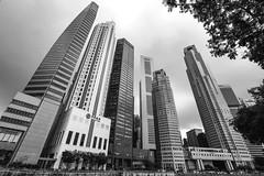 Towering (kiwi photo lover) Tags: singapore republic rafflesplace singaporeriver skyscraper tower maybank bankofchina capitaland onerafflesplace uob ocbc singtel standardchartered bw urban cityscape wattle tree