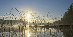 20191120Z7_6378FLR (cisco42) Tags: bc britishcolumbia canada dock cranberrylake water sky sun trees reflection powellriver
