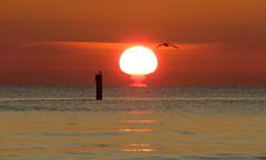 IMG_0022x (gzammarchi) Tags: italia paesaggio natura mare ravenna lidodidante alba sole animale uccello volo palo monocrome