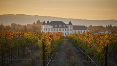 Golden Chateau (tourtrophy) Tags: winery chateau livermore trivalley sonyrx100vii sonyrx100m7 sonyrx100mk7 vineyard