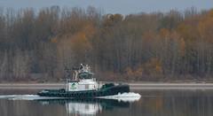 Carolyn Dorothy (TW Olympia) Tags: tugboat carolyn dorothy columbia river sauvie island oregon washington