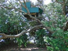 20191126-133211 (LSJHerbert) Tags: auckland castorbay geo:lat=3675619100 geo:lon=17476652500 geotagged milford newzealand nzl 20191126wtk viewranger coast construction housingdevelopment publicreserve sign tree