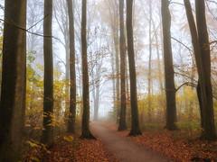 Foggy feelings (Zoom58.9) Tags: forest trees leaves nature park outside europe germany bremerhaven wald bäume blätter natur draussen fog nebel europa deutschland sony sonydscrx10m4