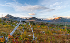 Sculpture Garden Sunrise 2 - Saint Mary, Glacier National Park (j-rye) Tags: fall glaciernationalpark ilce7rm2 landscape montana rokinon12mmf20 a7rm2 clouds mirrorless morningsun mountains nature sky sony sonyalpha sunrise trees