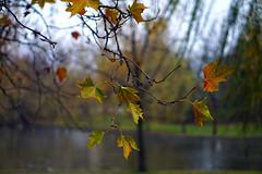 The last leafs (Dumby) Tags: landscape bucurești românia sector3 leafs ior titan park nature autumn fall colors