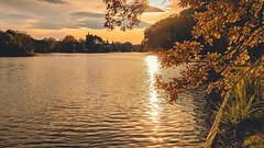 The romantic pond (a7m2) Tags: laxenburg loweraustria romanticpond franzensburg habsburger natur mariannentempel rittersäule eveningatmosphere sunset landschaftsgarten joggen wandern hiking