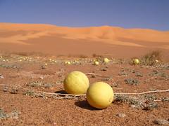 Libya (denismartin) Tags: libye libya denismartin ubari murzuk desert sand dunes tuareg toureg rockart umalma huntingscenes messaksettafet wadimathandush fezzan germa murzuq awbari acacus gabraon mafu ouankasa ليبيا الصحراء الكبرى wüste afrika africa