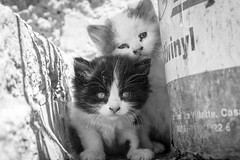 Street Cats, Morocco (Geraint Rowland Photography) Tags: cat feline cats streetcats animals portrait kittens straycats streetsofmarrakechinmorocco wwwgeraintrowlandcouk catportrait eyes curious cute fun funny maroc morocco poverty wildcats blackandwhiteanimals streetportrait canon travel