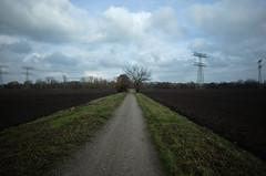 Feld, Weg, Baum (tom-schulz) Tags: ricoh grii rawtherapee gimp berlin thomasschulz weg perspektive feld baum strommast himmel wolken