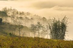 _Y2U1012.0213.Hầu Thào.Sapa.Lào Cai (hoanglongphoto) Tags: asia asian vietnam northvietnam northwestvietnam landscape scenery vietnamlandscape vietnamscenery sapalandscape nature morning morninginsapa sunlight sunnymorning mist canon tâybắc làocai sapa hầuthào phongcảnh phongcảnhsapa buổisáng nắng nắngsớm sươngmù thiênnhiên flanksmountain mountainouslandscape mountain núi sườnnúi phongcảnhvùngnúi northernvietnam natureofsapa fogofsapa sươngmùsapa earlyfrost earlymorning sươngsớm earlyfrostinsapa sươngsớmsapa morningsunshine morningsunshineinsapa nắngsớmsapa forest rừng theforest canoneos1dx canonef100400mmf4556lisusm springinsapa sapamùaxuân