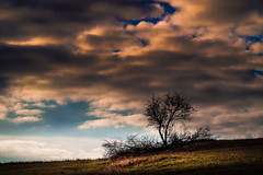 Clearing (Andrzej Kocot) Tags: andrzejkocot art adventure landscape landscapes creative clouds colors countryside colorful sky surreallandscape surreal sunlight skyline sunrisemood olympus omd outdoor poland polska forest lowlight photography