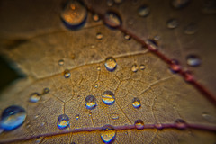 Droplets everywhere ! (@magda627) Tags: coth5 composition color art nature water leaf drop evening flickr light garden trees plant edit macro sony anteketborkacom fall outdoor closeup droplet automn green rain lightroom detail
