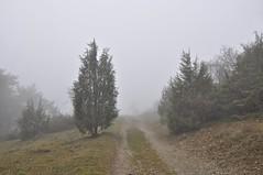 12 (Uli He - Fotofee) Tags: ulrike ulrikehe uli ulihe ulrikehergert hergert nikon nikond90 fotofee weinberg hünfeld naturschutzgebiet nebel november herbst grau grauingrau