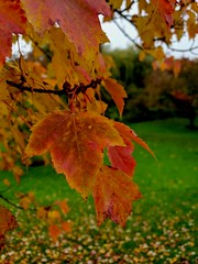 Is it too late for leaves to turn red? 🍁 (>Konstantinos<) Tags: leaves tree trees nature natureisbeautiful beautiful samsunggalaxys9 samsung mobilephotography mobile campus fall autumn boostedcolours colours