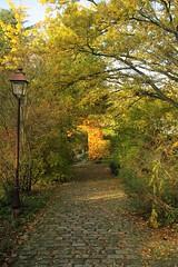Allée de jardin en automne - L'Ile Verte. Chatenay-Malabry. (jmsatto) Tags: automne arbres allée lileverte châtenaymalabry hurepoix