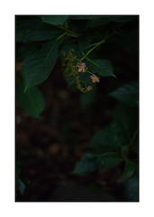 This work is 1/12 works taken on 2019/10/20 (shin ikegami) Tags: sony ilce7m2 a7ii sonycamera 50mm lomography lomoartlens newjupiter3 tokyo 単焦点 iso800 ndfilter light shadow 自然 nature naturephotography 玉ボケ bokeh depthoffield art artphotography japan earth asia portrait portraitphotography