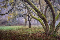 the older know the path (JogiExperience) Tags: langenlonsheim rheinlandpfalz wald forest woods woodlands herbst autumn fall bäume trees branches natur nature landschaft landscape jogiexperience fuji xt20 nebel fog mist