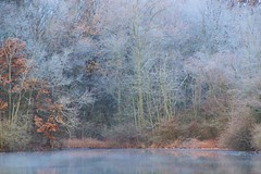 Transitioning (birdsetcetera) Tags: transitioning fall winter frost november 2019 frosty lakescape crescentlake berriencounty buchanan buchanantownship michigan michiana subtle sublime pastel soft softness dreamy johntrapp ethereal serene autumn morning mystical enchanted enchanting 3000v120f peaceful magical