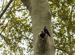Nest / Гнездо (dmilokt) Tags: город венгрия city hungary dmilokt птица bird