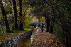 LOS CAMINOS DE LA VIDA  ... (marthinotf) Tags: acequia canal riego bosque otoño arboles bicicletas paseos lagunadeduero losvalles