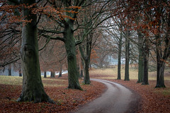 Autumn Avenue (jillyspoon) Tags: autumn autumncolours autumnal studleyroyal nationaltrust trees treelined northyorkshire yorkshire treetrunks branches leaves sony alpha