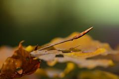 (sylvie337) Tags: détails bois automne hêtre