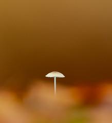 Simplicity (Lesley Danford) Tags: fungi fungus autumn woodland uk