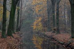 The time of the year (robvanderwaal) Tags: autumn natuur netherlands nature reflection reflectie nederland bos herfst trees robvanderwaalphotographycom bomen dutch forest 2019 voorneputten water