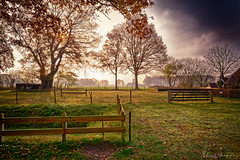 Tranquil Scene In The Low Sun (Alfred Grupstra) Tags: tree nature autumn outdoors parkmanmadespace landscape grass bench season sunlight ruralscene scenics sunset woodmaterial sky nopeople leaf tranquilscene sun 88 lowsun