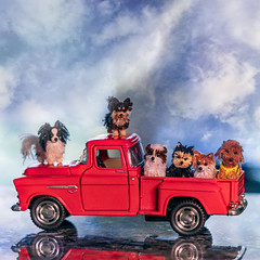 We heard wanna go out!! HCT :-) (Dotsy McCurly) Tags: crazytuesday transport hct happycrazytuesday car truck red dog teeny tiny handmade toyphotography sky adobephotoshop canoneos80d efs35mmf28macroisstm