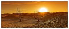 Au petit matin... (Jean-Louis DUMAS) Tags: dune soleil sunset sunrise sunlight sun arbre tree sable ciel desert sky sony panoramique panoramic paysage landscape landscapesdreams voyage trip travel traveler voyageur maroc