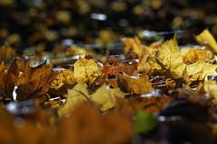 waiting for the sun, uploading a pic with the sun :-) (margycrane) Tags: autumn jesień sun light leaves liście park colours sonyilce7m3 fe24105mmf4goss