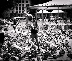 The Birds (dlerps) Tags: amount barcelona catalanya catalunya city daniellerps es espana lerps photography sony sonyalpha sonyalpha99ii sonyalphaa99mark2 sonyalphaa99ii spain spanien urban httplerpsphotography lerpsphotography birds animals monochrome bw dove doves blackwhite woman streetphotography carlzeiss female crowd plaçadecatalunya selfie scared planart1450 latina carlzeissplanar50mmf14ssm pigeon pigeons flock