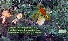Tweeting twaddle (quasuo) Tags: tweetingtwaddle morning poem poetry words text thoughts bird nature trees poemecho philopoets quasuo poetictirade leafs postcardpoetry twigs