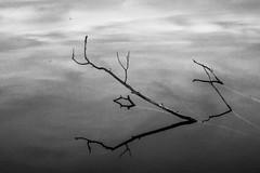 Black and white meditation (matwolf) Tags: water wasser ast branches blackandwhite schwarzweis noiretblanc noir lake outdoor blancoynegro blancetnoir meditation