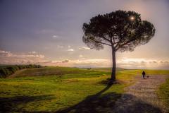 Tuscany19 #4 (Roberto Defilippi) Tags: 2019 392019 rodeos robertodefilippi tuscany toscana italia italy tmpanelv5 tonalitymask gobefilters landscape nikon journey tree albero