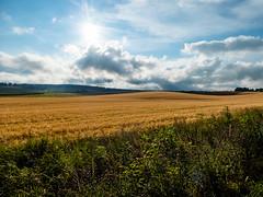 Pole (Tymcio Piotr) Tags: pole landscape krajobraz