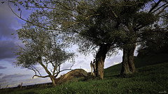 Love story (Un jour en France) Tags: canoneos6dmarkii canonef1635mmf28liiusm arbre tree bocage nature hautsdefrance picardie oise love amour couple lovestory